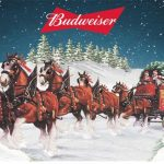 Budweiser Clydesdales Visiting Space City for the Holidays